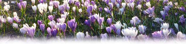 Jobs to do in the garden in march for Gardening jobs for march