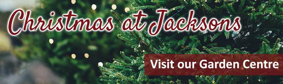 Christmas at Jacksons Nurseries Garden Centre in Bagnall, Staffordshire