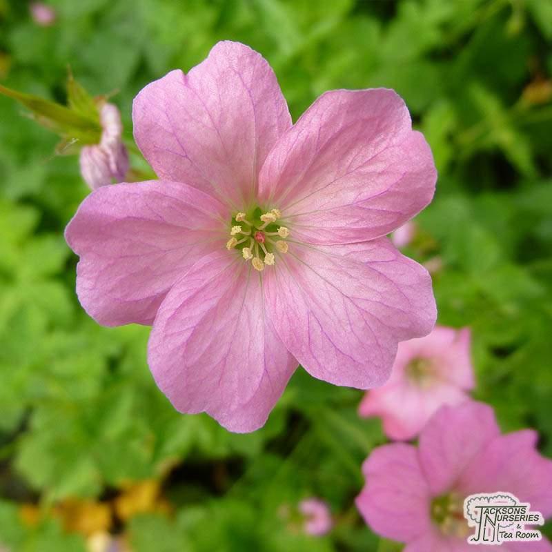 Pink Plant Room