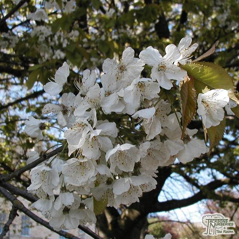 Bamboo Garden Uk