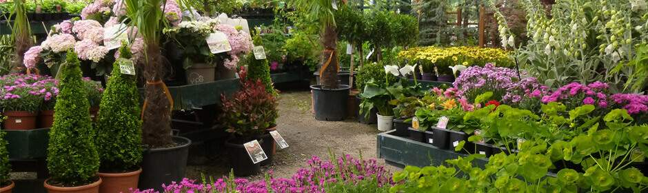 The Garden Centre at Jacksons Nurseries in Bagnall, Staffordshire