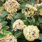 Buy Low Maintenance Plants Online