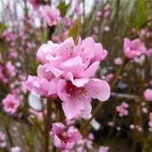 Spring Interest Plants