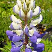 Buy Wildlife Attracting Plants Online