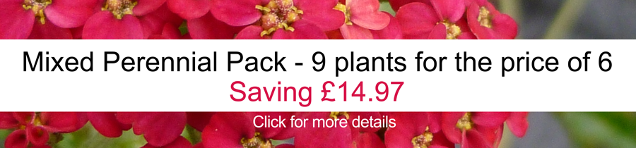 Buy Perennials online in the UK at Jacksons Nurseries