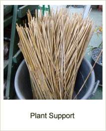 Buy Plant Support at Jacksons Nurseries