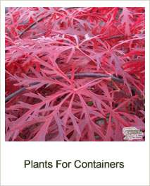 Buy Plants Containers Online