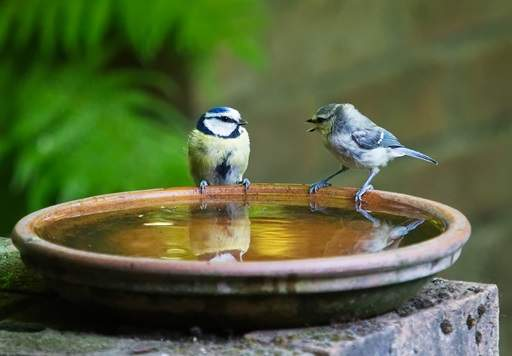 Bird bath with birds sitting on side