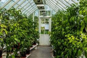 In greenhouse