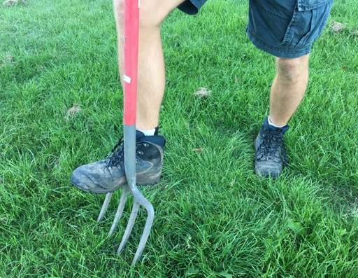 Spiking lawn with garden fork