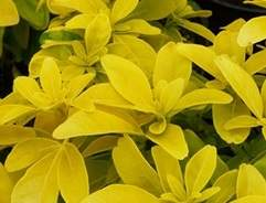 How to grow shrubs