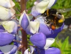 Attracting Butterflies & Bees