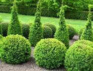 Guide to Topiary Button