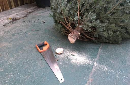 Sawing off one inch from base of Christmas tree