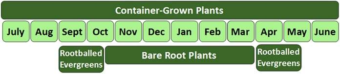 Bare root planting times
