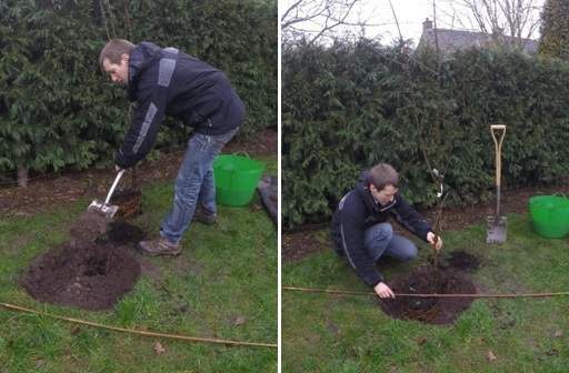 Checking tree planting depth