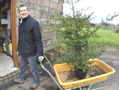 Choosing conifer when and where plant