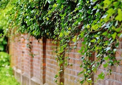 Guide To Climbing Plants Jackson S Online Garden Centre
