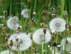 Controlling weeds in your garden