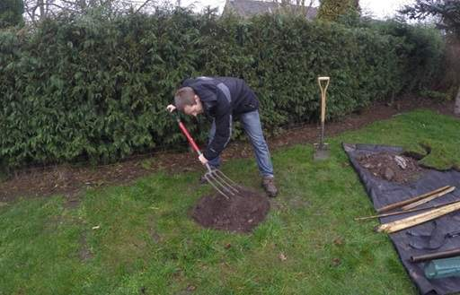 Forking the tree planting hole