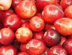 Grow your own Cranberries