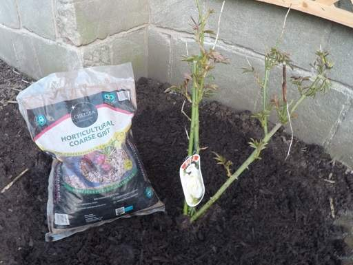 Horticultural grit with climbing rose