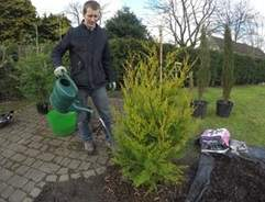 How to grow conifers