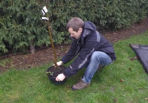 Marking the tree planting hole