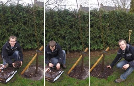 Mulching planted tree