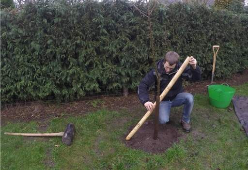Staking your tree