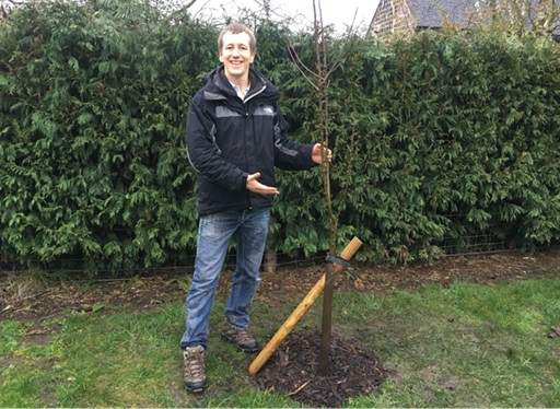 Bare root tree planted