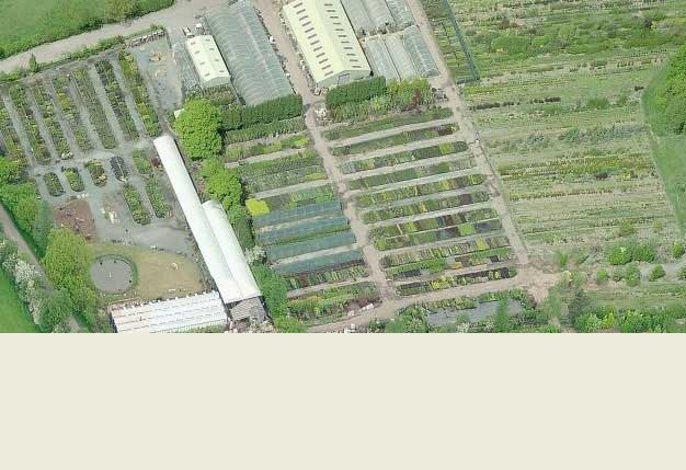 Buy Plants Online Online Garden Centre And Plant Nursery