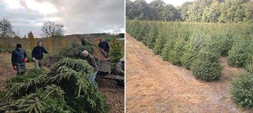 Christmas tree environmental benefits