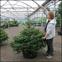 Christmas Tree Size Guide