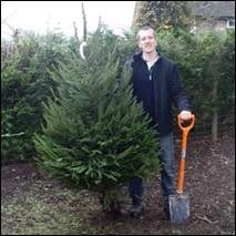 Buy Real Christmas Trees Online for Home Delivery ...