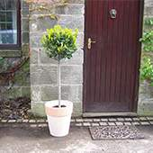 Plants for Entrances and Doorways