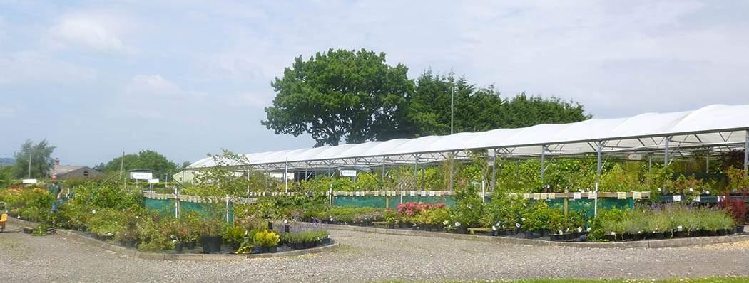 Staffordshire Garden Centre - Shrub Beds