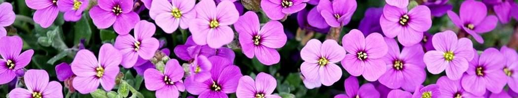 Gardening FAQs