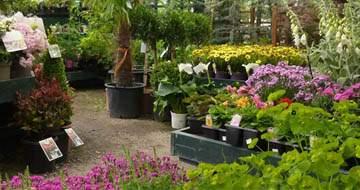 Staffordshire Garden Centre