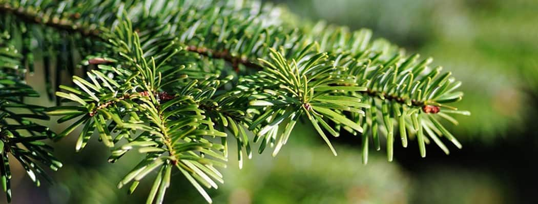 Shop Conifers Now