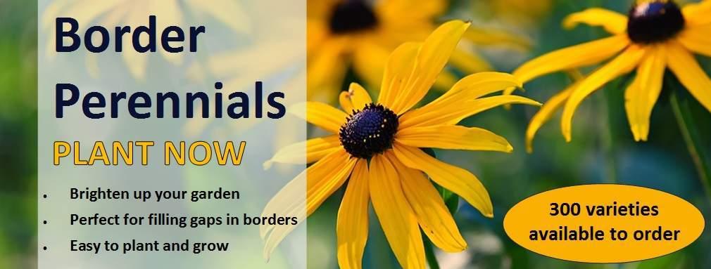 Border perennials