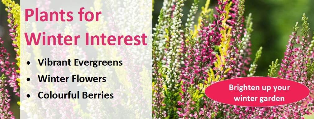 Plants for Winter Interest Homepage Banner
