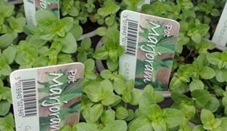 Herb plants for rockery garden