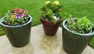Shop all plants for patio containers