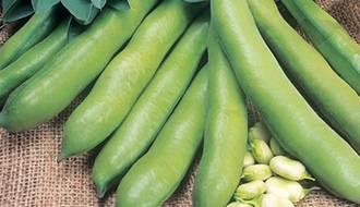 Broad Bean Seeds