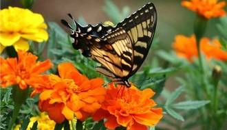 Flower Seeds for Attracting Wildlife