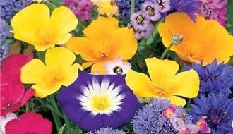 Mixed Flower Seeds