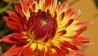 Perennials by Flower Colour