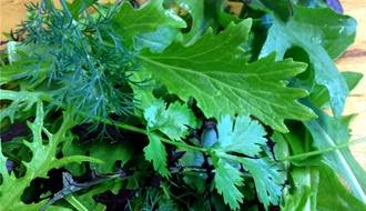 Salad Leaf Seeds