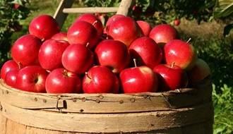 Self fertile fruit trees